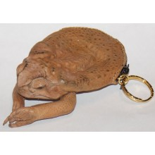 Cane Toad Coin Purse